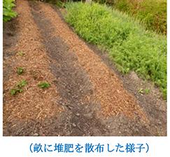畝に堆肥を散布した様子